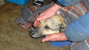 Na ratunek psu przyszła Baltica (IMiGW)