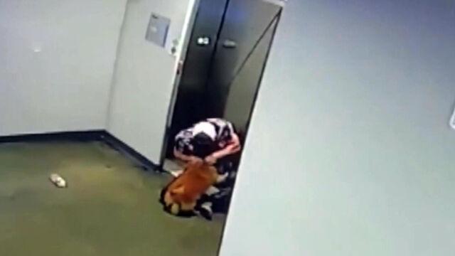 Pies nie zdążył do windy. Mógł zginąć