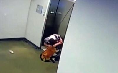 Pies nie zdążył wejść do windy za swoją właścicielką
