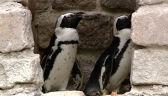 Historia o rodzinie pingwinów ma uczyć małe dzieci tolerancji. Młodzież Wszechpolska takie nauki chce wysłać na Antarktydę