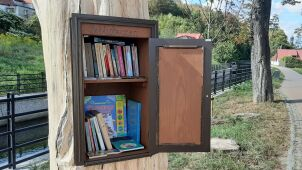 Biblioteczka w pniu wyschniętego kasztanowca.