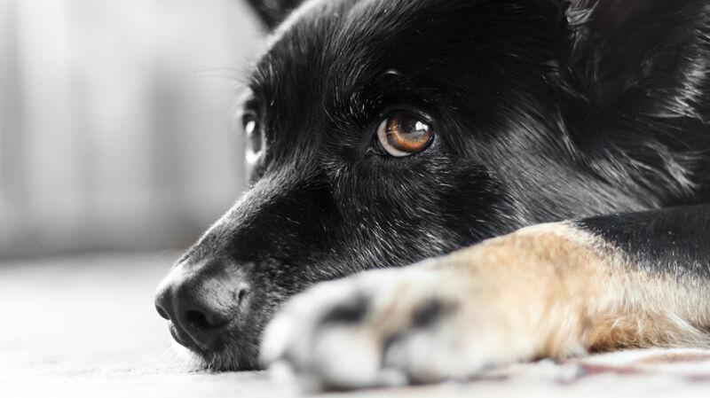 Zwierzę to nie prezent. Schronisko w Bełchatowie wstrzymało adopcję w święta