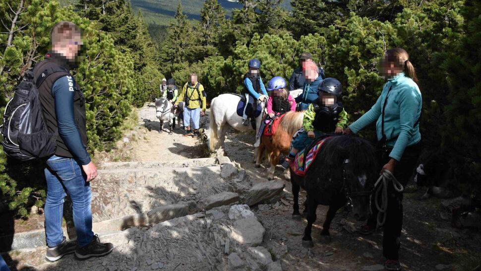 """Turyści z dziećmi na kucykach w drodze na szczyt Śnieżki. """"Świat oszalał"""""""
