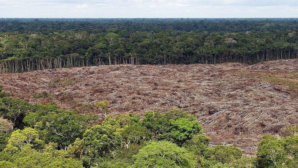 Puszcza Amazońska znika. Bolsonaro do Merkel: bierz tę swoją kasę i zalesiaj Niemcy