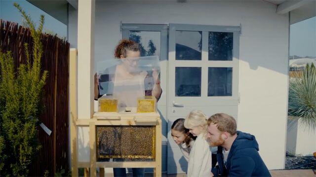 Miód z własnego balkonu? Tak wygląda miejski ul