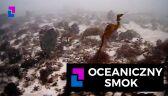 Oceaniczny smok
