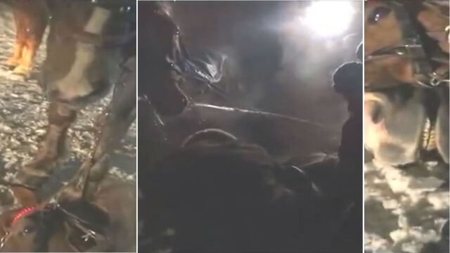 Koń padł po kuligu. Policja: po piątej przejażdżce pod górę, po 12 godzinach pracy