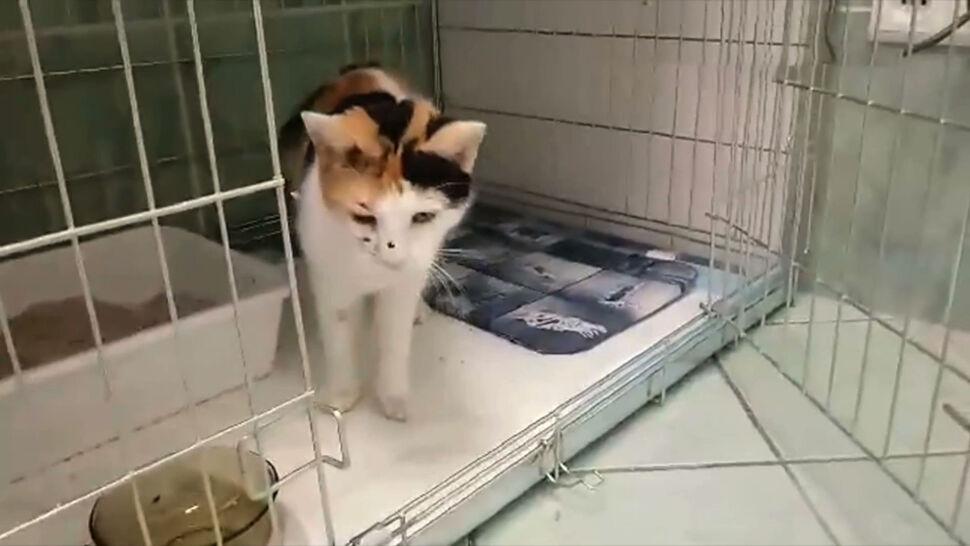 Strzelał z wiatrówki do kota. Skazany na więzienie