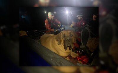 Akcja ratowników na Grandeur Peak. Ratownicy znosili psa na noszach