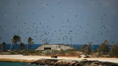 Na atolu królują ptaki. W tle jeden z bunkrów postawionych przez wojsko a na pierwszym planie grupa ochotników, którzy przez sześć miesięcy w roku walczą z inwazją zabójczych dla ptaków termitów i mrówek