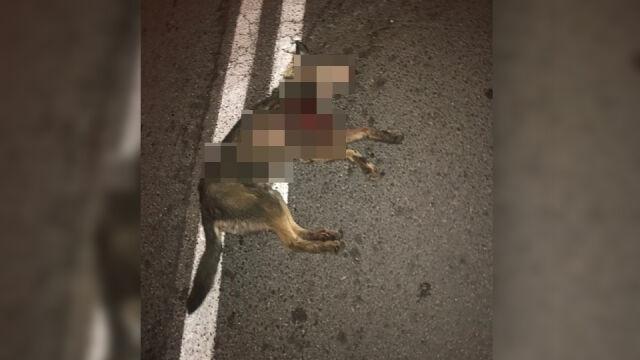 Ciągnął psa na lince za samochodem. Policja: nieszczęśliwy wypadek