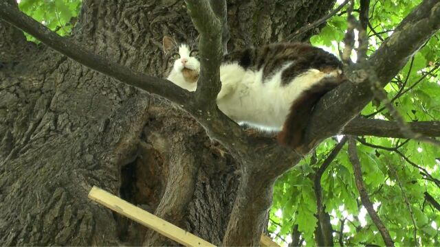 Kot z Bartoszyc od kilku lat mieszka w dziupli w drzewie