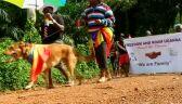 Uganda chce wykonywać karę śmierci za homoseksualizm