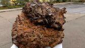 Największy grzyb na świecie