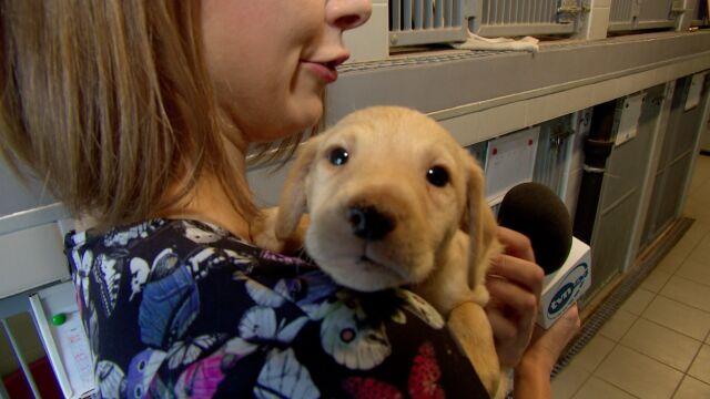 Porady behawiorysty, wystawa psów. Tak zachęcają do adopcji we wrocławskim schronisku