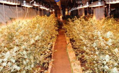 Policja zlikwidowała plantację marihuany wartą ponad milion złotych