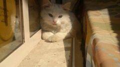 Kunkush w Iraku uwielbiał się wylegiwać na słońcu