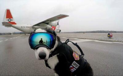 Pies na samoloty