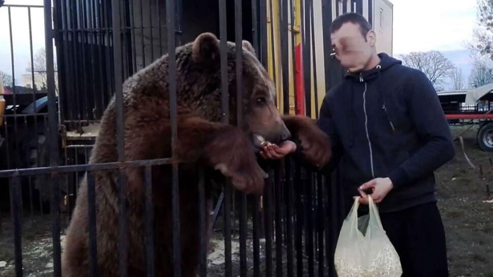 """Zabrali niedźwiedzia z cyrku. """"To inwalida. Gdyby tu został, przestałby chodzić"""""""