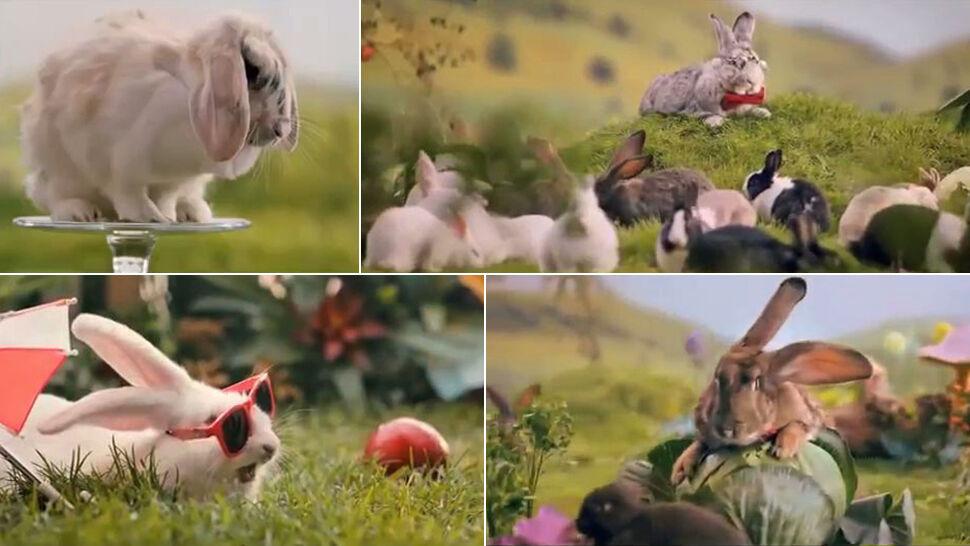 """Blisko trzy miliony na kampanię z królikami. """"Wiemy, jak zadbać o liczne potomstwo"""""""