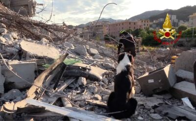 Help dogs find people who can be trapped under the rubble