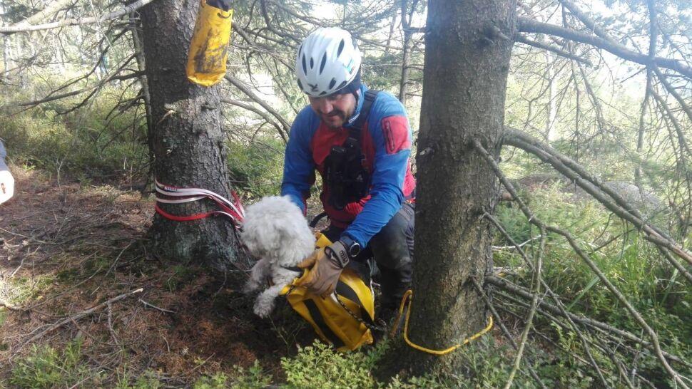 Pies wpadł do górskiej szczeliny. Wyciągnęli go ratownicy