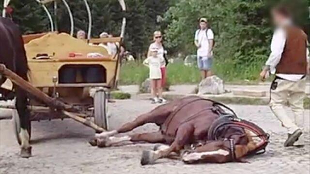 """Chcą zabrać konie z Morskiego Oka. """"Pracują zbyt ciężko"""""""