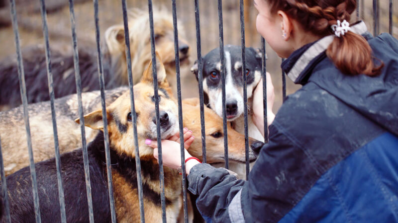 Niemcy: zakaz adopcji zwierząt w okresie świątecznym