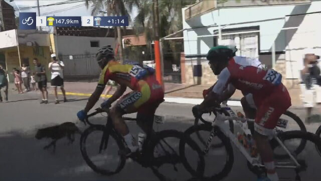 Pies wbiegł wprost pod koła. Kraksa za kraksą w kolarskim Vuelta a San Juan