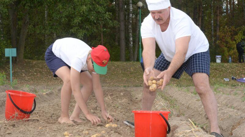 Prezydent z Kolą na kartoflisku. W półtorej godziny obrobili dwuhektarowe pole