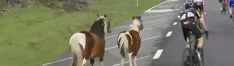 """""""Patataj, patataj"""". Niebezpiecznie na Vuelcie, na trasę wbiegły konie"""