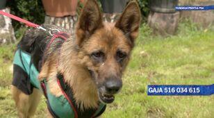 Opiekuńcza Gaja szuka domu
