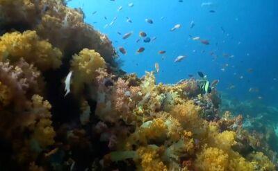 Zakaz stosowania kremów do opalania na Karaibach