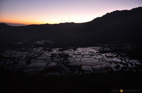 Tarasy ryżowe o wschodzie słońca. Chiny