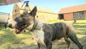 Policjant użył paralizatora, pies stracił wzrok