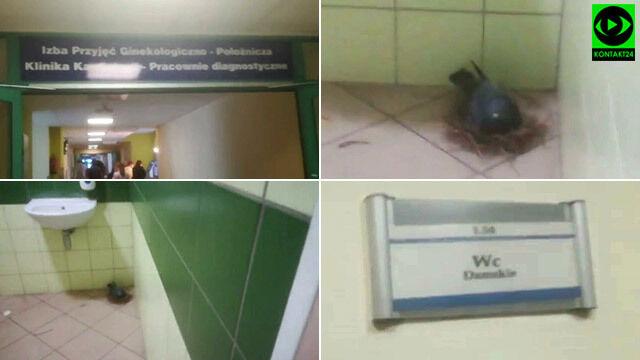 Gołąb uwił gniazdo w szpitalnej toalecie.