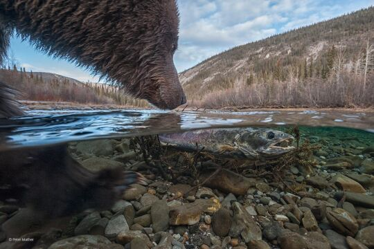 'Whats This' Peter Mather, Kanada