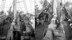 Pokład Endurance był wielkim kojcem dla stada psów pociągowych. Na początku XX wieku nie mogła się bez nich obyć żadna wyprawa polarna. Świetnie znosiły zimno oraz były bardzo silne i wytrzymałe.