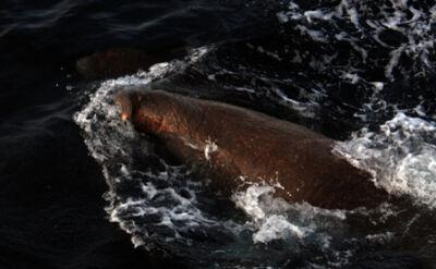 Morsy zaatakowały i zatopiły rosyjską łódź marynarki wojennej
