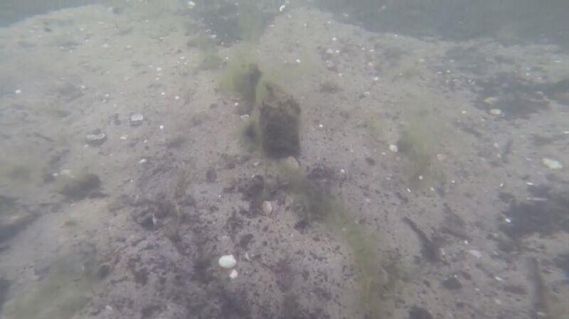 Podwodny las w Rzucewie