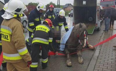 Koń przewrócił się na drodze
