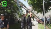Strażacy z Nysy pomogli młodej sowie