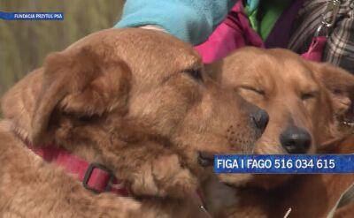 Figa i Fago szukają wspólnego domu
