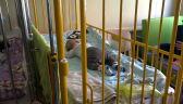 WOŚP przekazała 170 specjalistycznych łóżek