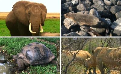 """""""Bezprecedensowy wzrost tempa wymierania dzikiej przyrody"""". Eksperci ONZ alarmują"""