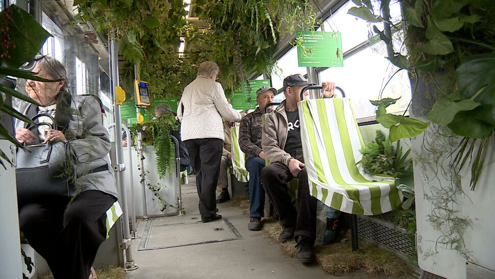 Zielony tramwaj kursuje w Będzinie i Sosnowcu. Są w nim rośliny