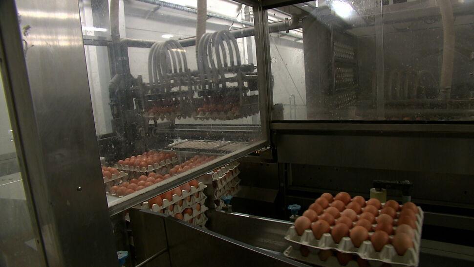 Jaja pod lupą. Polacy stawiają na wolny wybieg