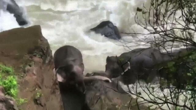 06.10.2019   Pięć słoni ruszyło ratować małego słonika. To historia bez happy endu