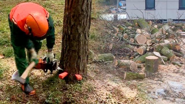 25.01.2017 | Nowe zasady i nowe opłaty. Kiedy można ściąć drzewo na działce?