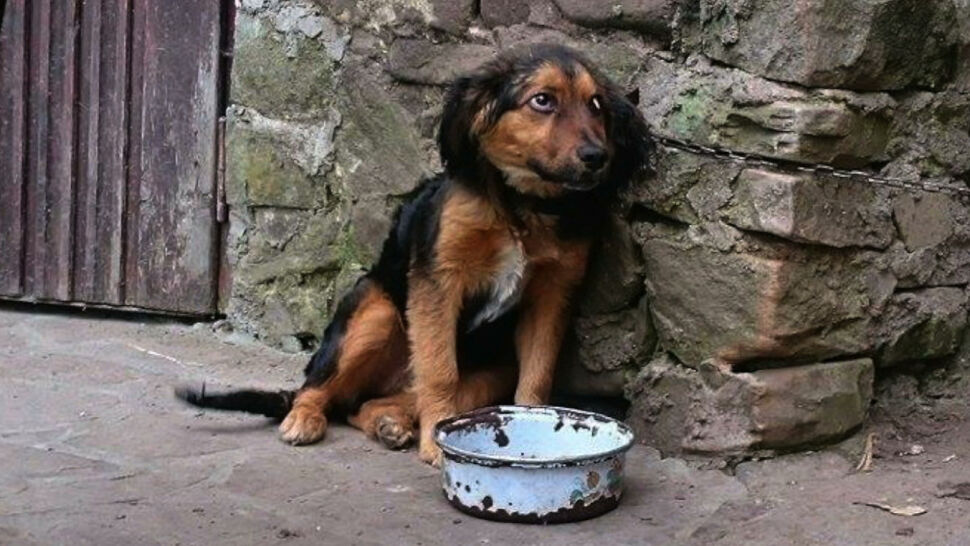 Odbieranie zwierząt oprawcom może być trudniejsze. Obrońcy praw zwierząt podnoszą alarm
